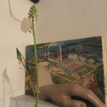 Female Student seeking roomshare in Margate